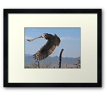 Great Horned Owl ~ 6mo Juvenile Framed Print