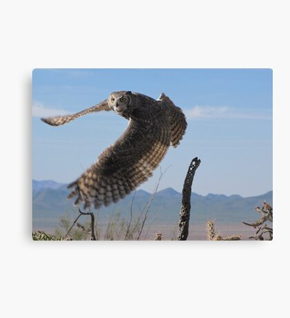 Great Horned Owl ~ 6mo Juvenile Canvas Print