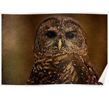 The Wise Little Owl Poster