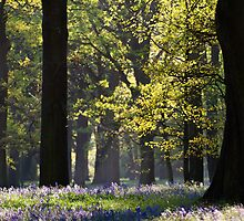 Springtime in Little Hagley by Rob Dickinson