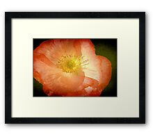 Fragile ©  Framed Print