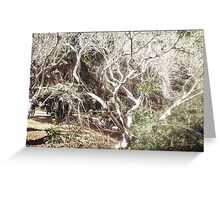 Leafless tree and greenery  Greeting Card