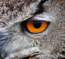 Eye Spy by Robert  Geldard