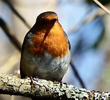 Robin in the Sun by DEB VINCENT