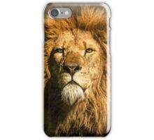Lion on the alert iPhone Case/Skin