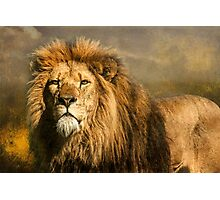 Lion on the alert Photographic Print