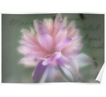 Full Bloom... Poster