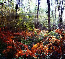 Autumn Woodland Glade by Paul Rumsey