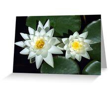 Sirius Flowers Greeting Card