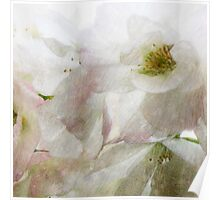 Snow Dreams Collection - Cherryblossom Poster