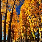 Autumn Trees on the shores of Lake Wanaka by S T
