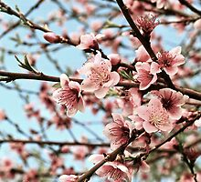 Blossom by Briony  Williams Photography