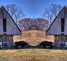 Double vision by David Owens