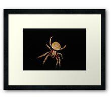 Garden Orb Weaver Framed Print
