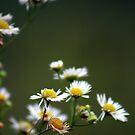 Morning Flowers for You! by Vivek Bakshi