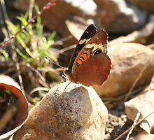 Buckeye Butterfly On Rock by Terry Aldhizer