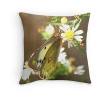 Pink Legged Orange Sulfur Butterfly Throw Pillow