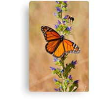 Monarch Butterfly - 33 Canvas Print