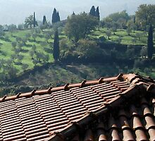 Tuscan Trees and Valley-Petrolo by Deborah Downes
