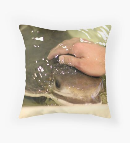 Petting a sting ray Throw Pillow