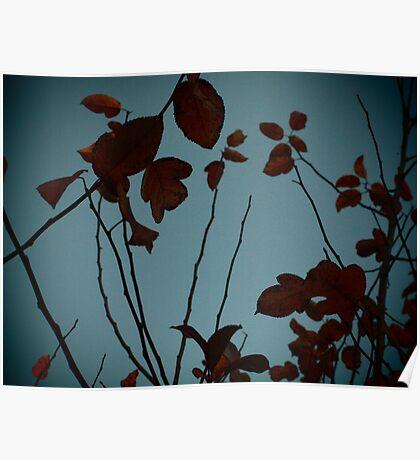 Fall Through a Pinhole Poster
