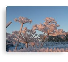 Haw Frost on Fennel Canvas Print