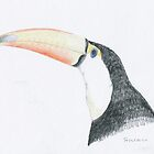 Toucan by Sue Brown