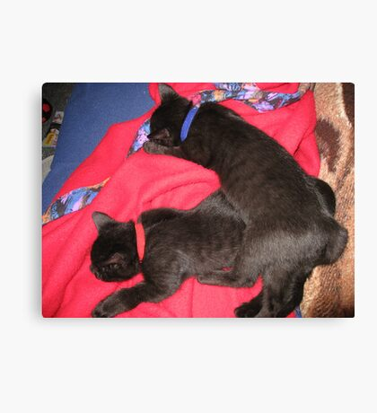 SLEEP  KITTENS  SLEEP Canvas Print