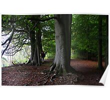 eves wood beeches 2a Poster