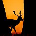 Deer by Eddie Howland