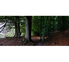 eves wood beeches panorama Photographic Print