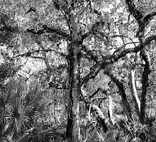 Swamp Tree  by Frank Bibbins