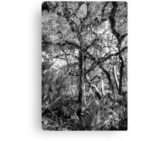 Swamp Tree  Canvas Print