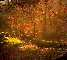 Magickal Forest by Loren Goldenberg-Kosbab
