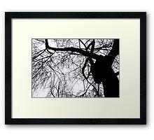 Schattenbaum Framed Print