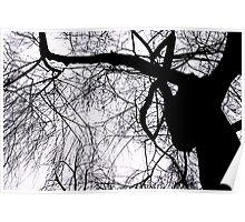Schattenbaum Poster