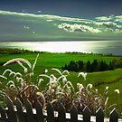 Backyard View by Igor Zenin