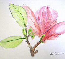 Tulip Tree Blossom by imokru3