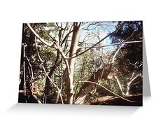 Leafless tree and skyline Greeting Card