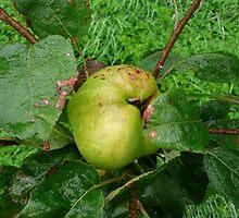 Grenadier Apple by Pippa Black