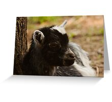 Black and White Baby Goat Greeting Card