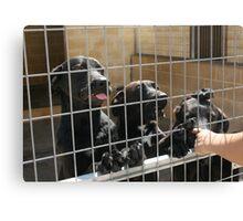 RESCUE ME! Protectora de Animales y Plantas de Málaga 5 Canvas Print