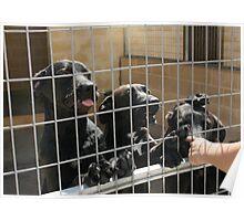 RESCUE ME! Protectora de Animales y Plantas de Málaga 5 Poster