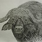 Cape Buffalo by Istvan froghunter