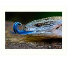 Blue-tongued Lizard  (Tiliqua scincoides scincoides) Art Print