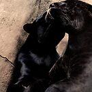 Black Panther Caress by evilcat