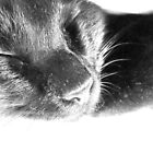 The Good Life - Sleeping Cat by Chris  Butler