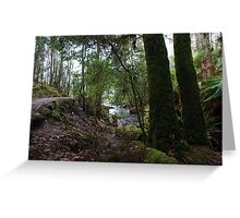 Rainforest 8 Greeting Card