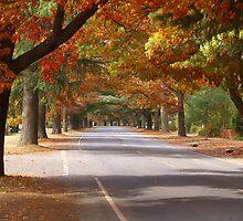 Bright Autumn by Cole Stockman