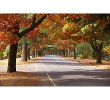 Bright Autumn Photographic Print